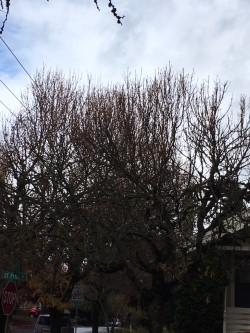 Bare tree 2 .jpg