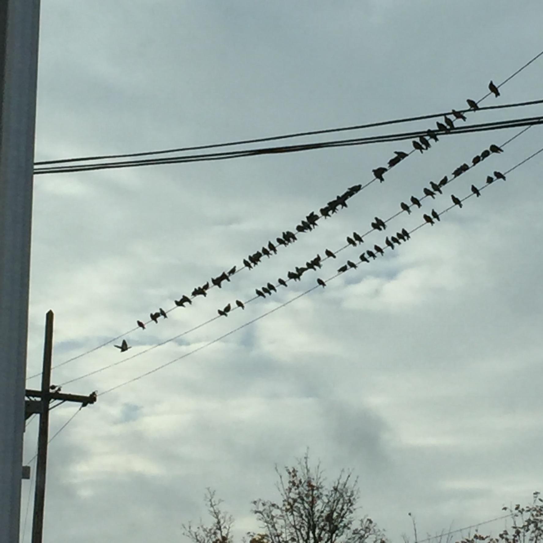 Birds on a wire .jpg