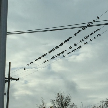 Birds on a wire .jpg
