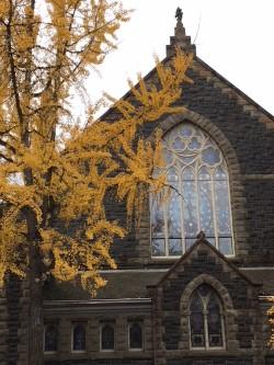 Church yellow leaves .jpg
