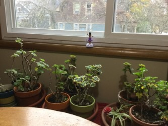 House plants 1 .jpg