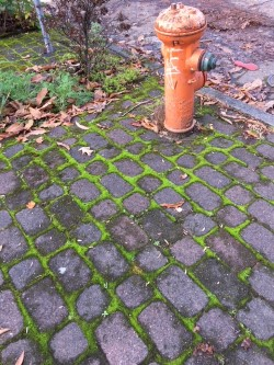 moss between cobbles.jpg