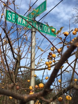 street sign through bare apples.jpg