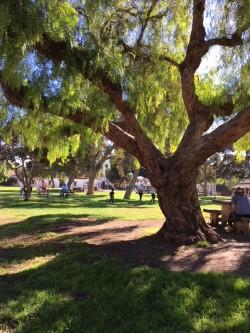 sunny park SD .jpg