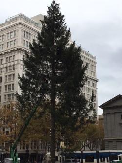 Tree going up .jpg
