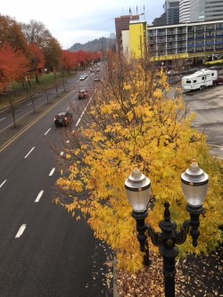 yellow leaves from bridge .jpg