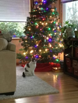 cat tree up .jpg