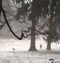 dog in foggy forest.jpg