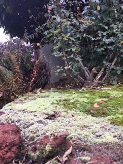 frosty moss .jpg