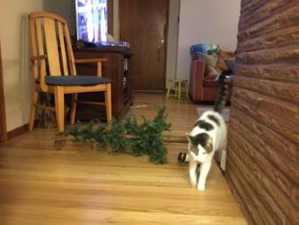 kitten tree down2.jpg