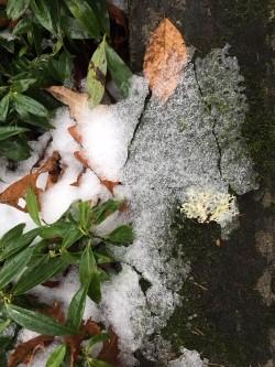 leaf and snow.jpg