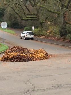 leaf pile .jpg