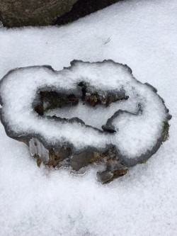 stump ice.jpg