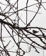 tiny-bird-sillohette10.jpg