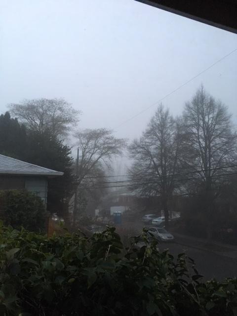 winter solstice fog.jpg