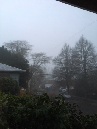 winter solstice fog.jpg