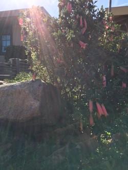 fairy home bush with bells.jpg