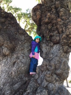 Liza pepper tree.jpg