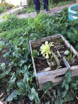 mimis succulent.jpg