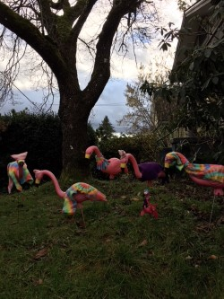 womens march flamingos.jpg