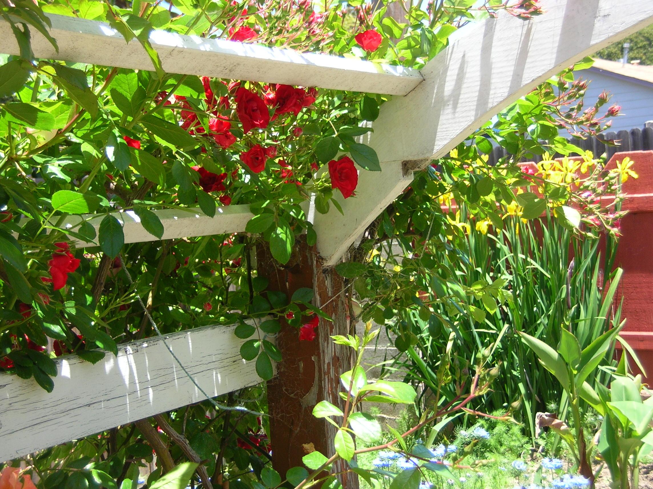 garden tour lompoc 001.jpg