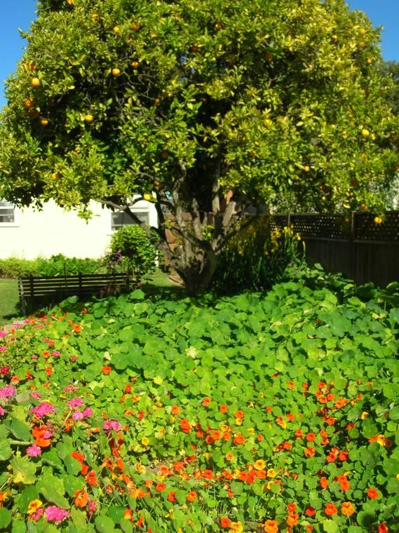 garden tour lompoc 016.jpg